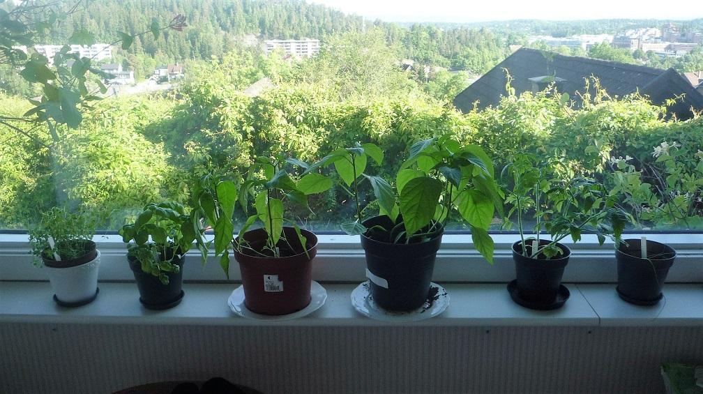 plant6